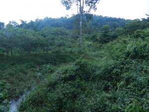 The uplands of ANgkor, Cambodia.