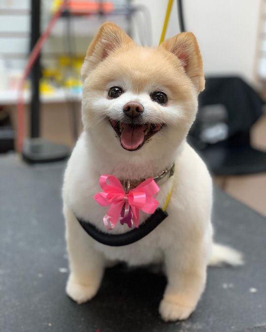 Canine Design Shop