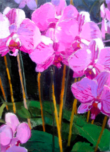 Rose Orchids