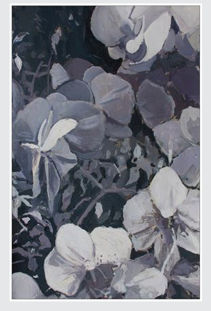 Black & White Orchids