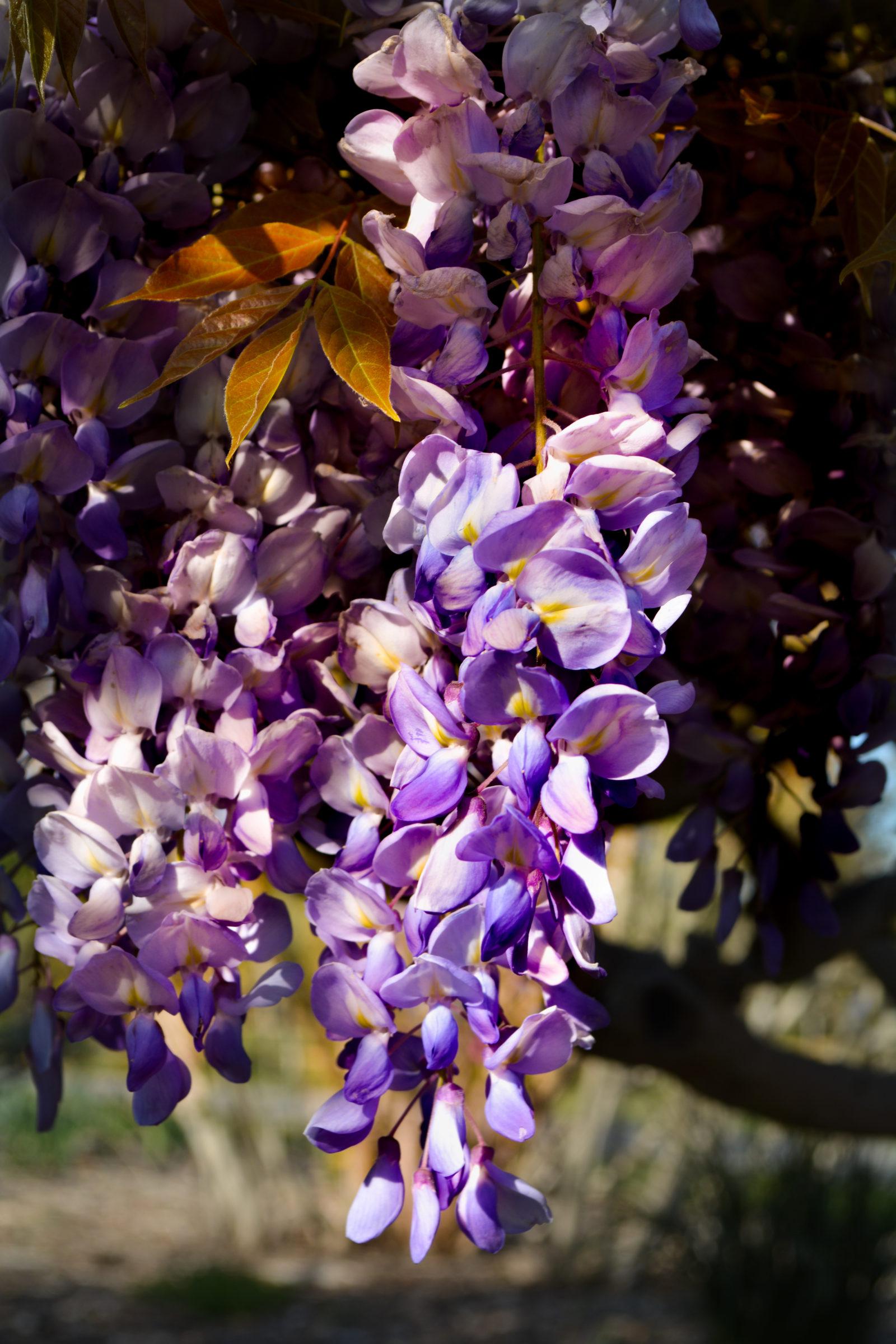 nature_flower1