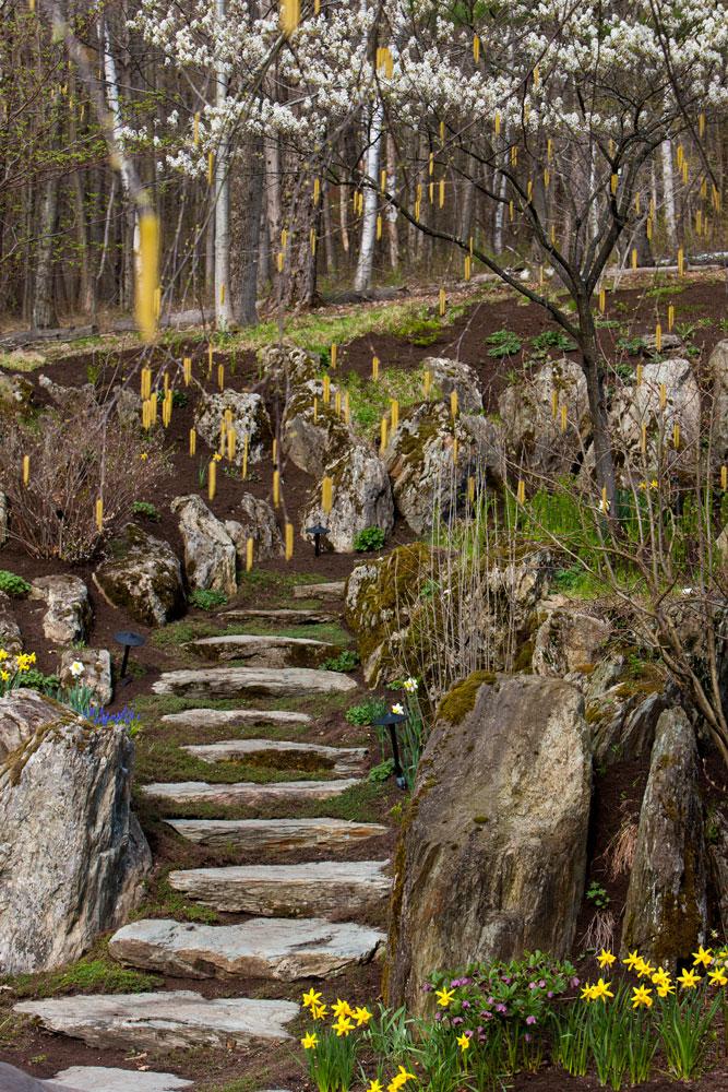Amelanchier-and-birch-in-bloom,-woodland-garden