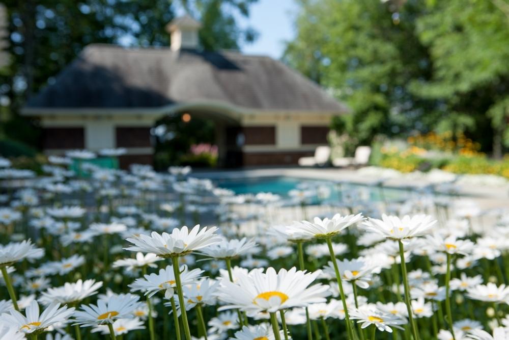 Bershire-pool-with-shasta-daisy