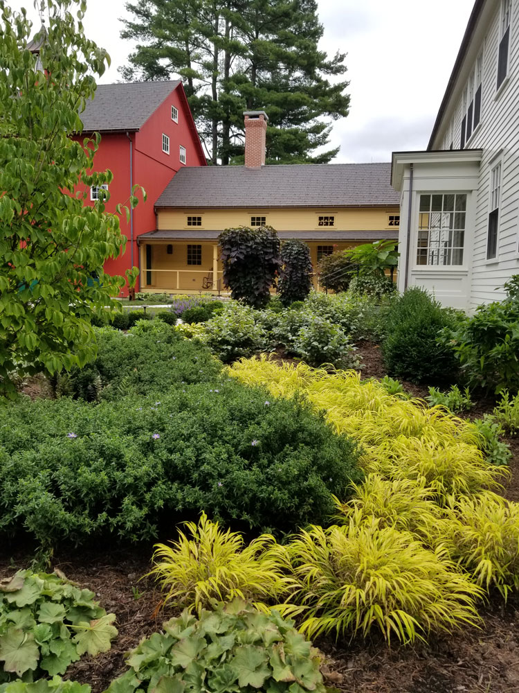 Hakonechloa-'all-gold',-with-aster-and-weeping-redbud