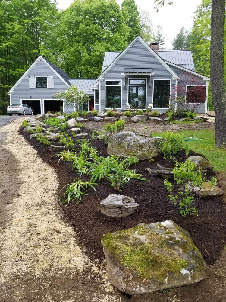 Rain-garden,-first-year