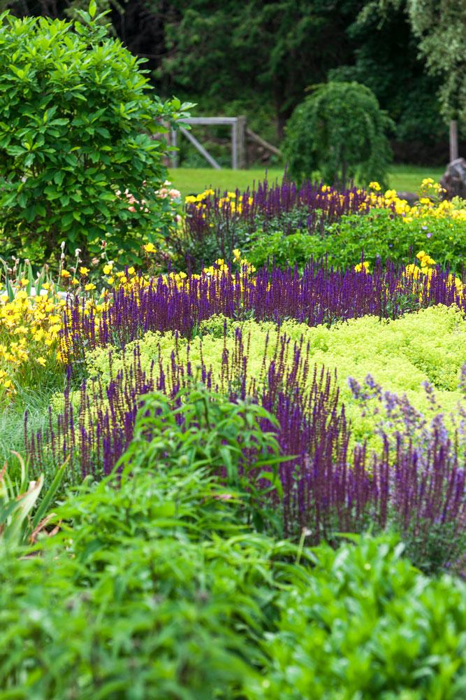 Saliva,-lady's-mantle,-evening-primrose