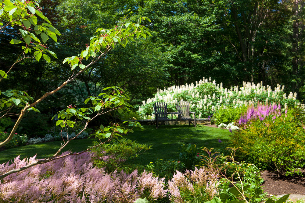 Shady-seating-area,-bottlebrush-buckeye-and-astilbe-in-bloom