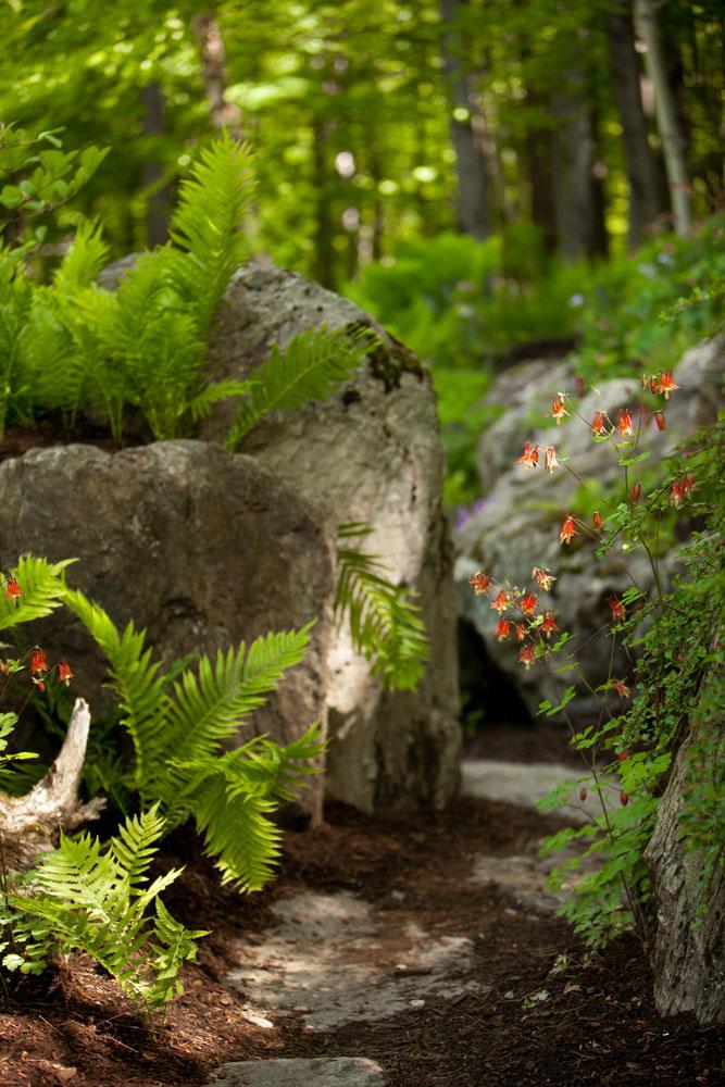 Woodland-path-with-columbine