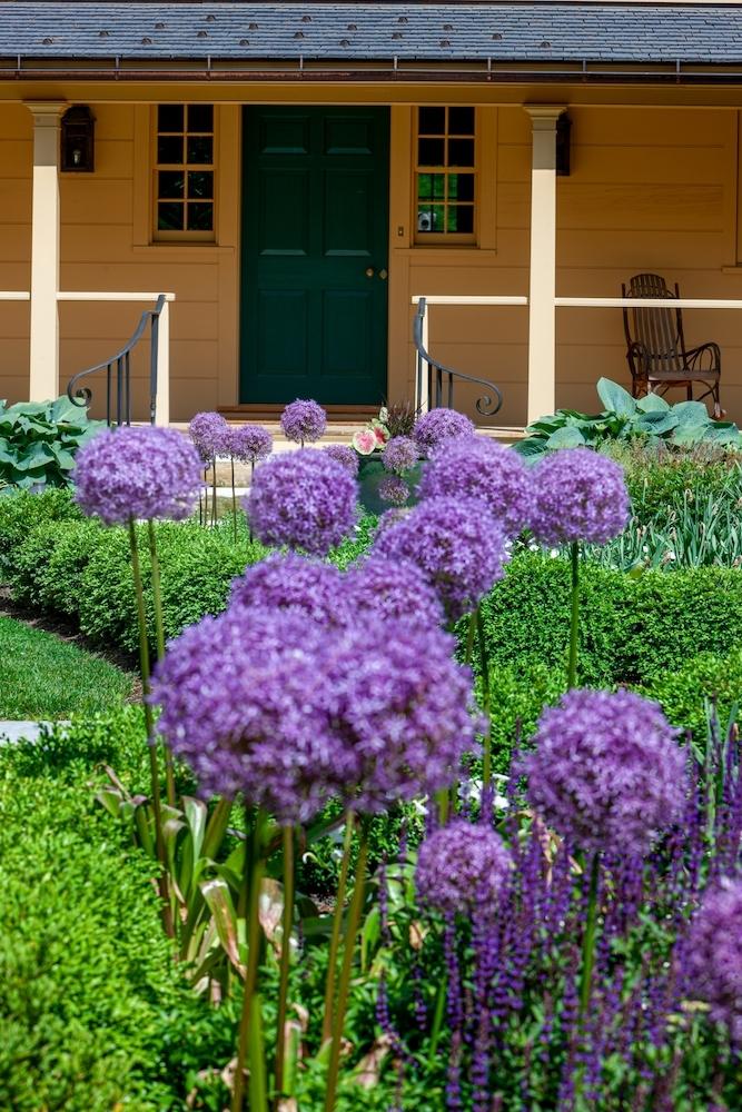 Rebekah Lamphere – Allium in Garden