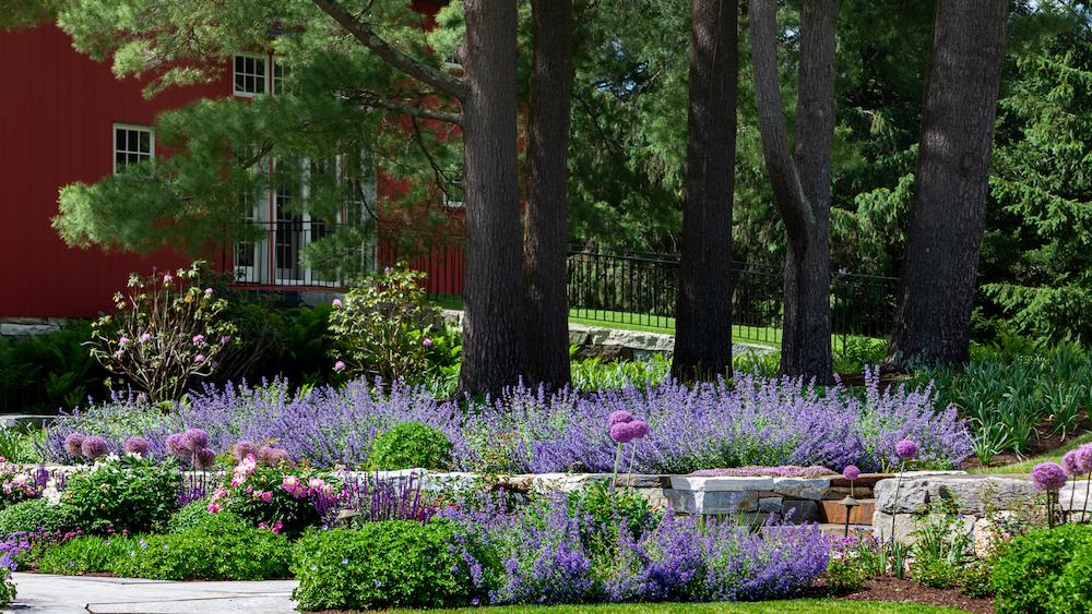Rebekah Lamphere – Nepeta Garden