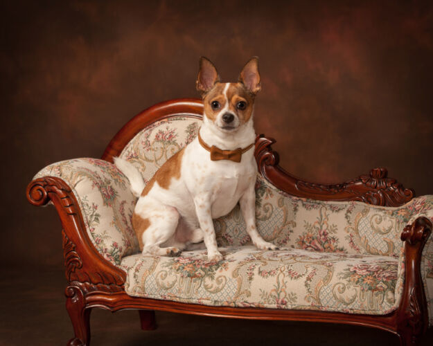 PetPortrait_Moorman_1