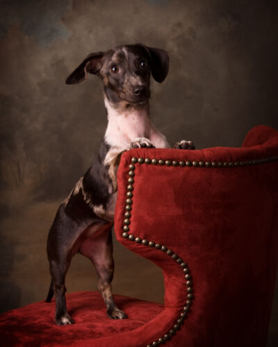 PetPortrait_Moorman_2