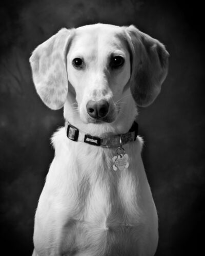PetPortrait_Moorman_5