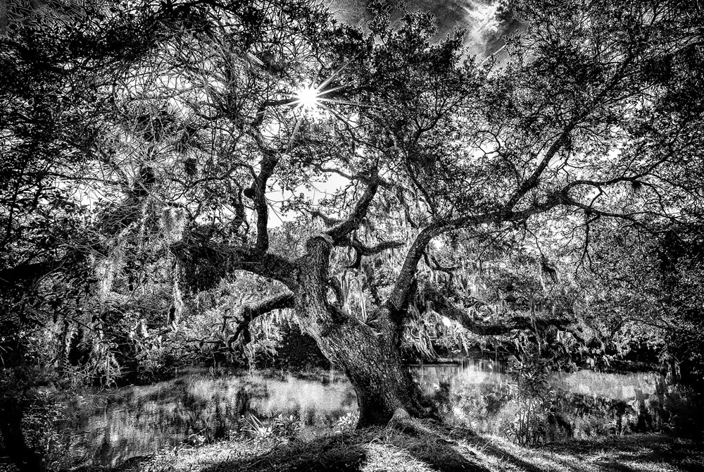 Black and White Tree at Pond