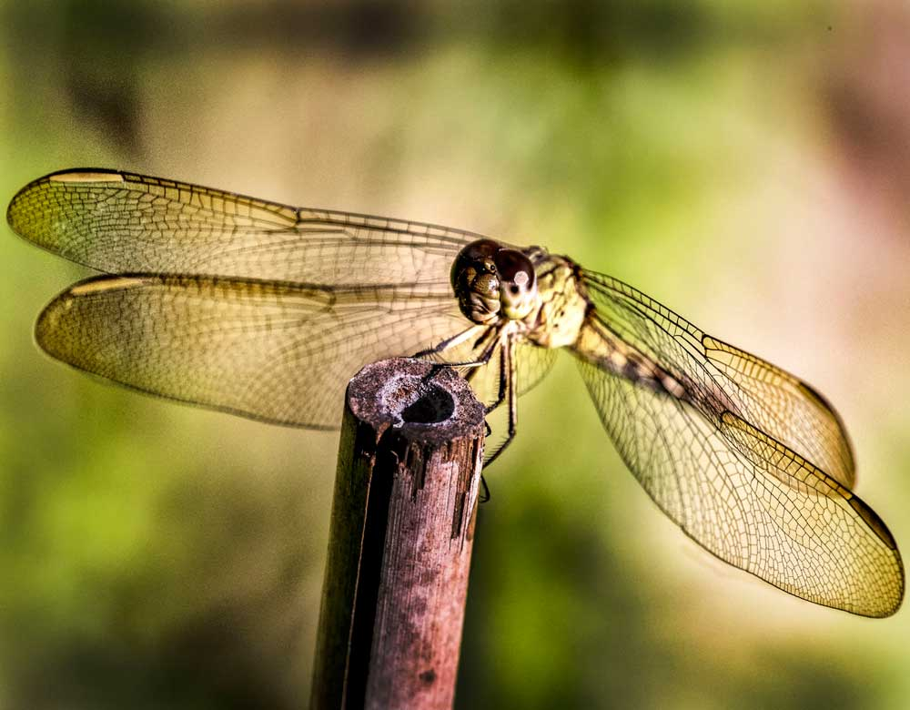 Dragon fly image