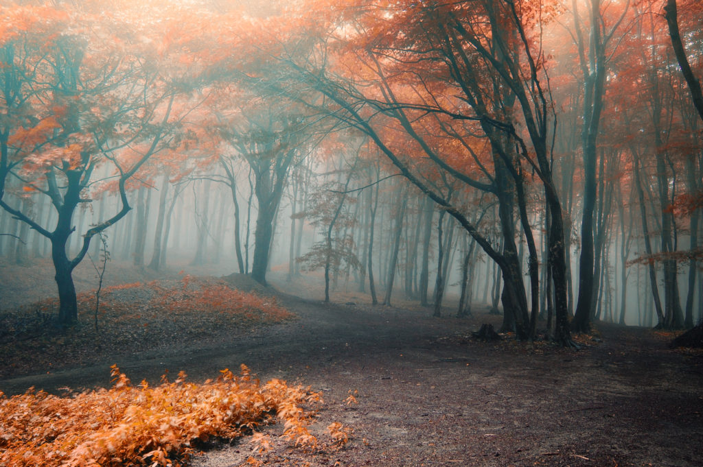 Misty section of fall wood