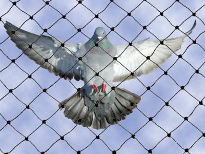 bird control bird net canada