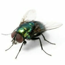 Flying Insect Control