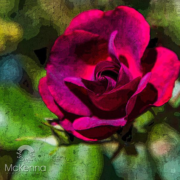 Flower2697-2_copy