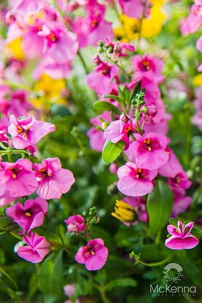 Flower_2578_copy_2