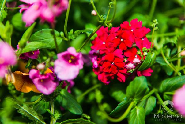 Flower_2580_copy