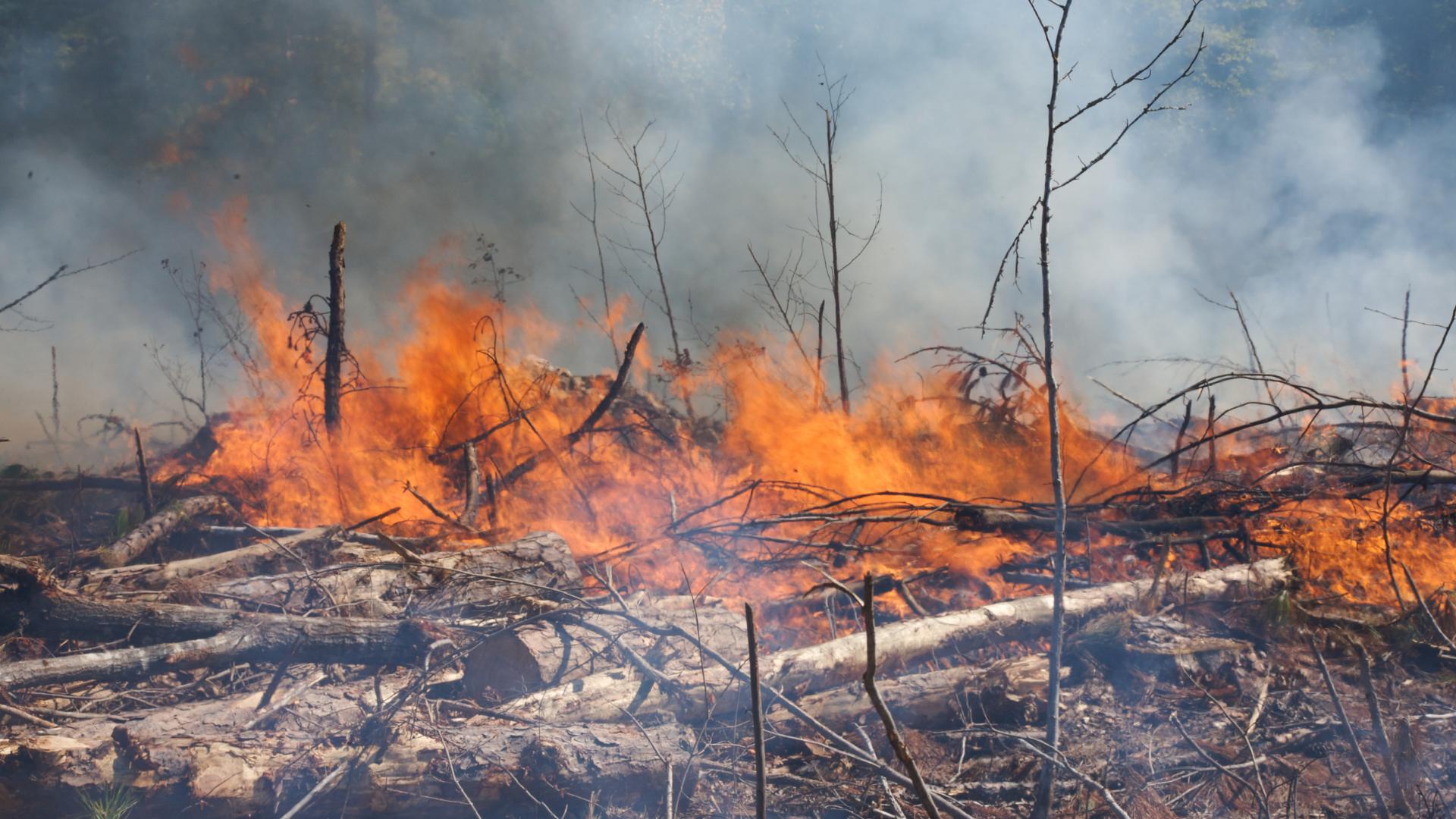 O sequestro do ônibus e as queimadas: descompasso entre o Brasil e o mundo