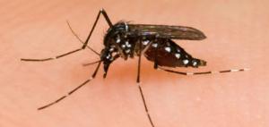 file photo to mosquito