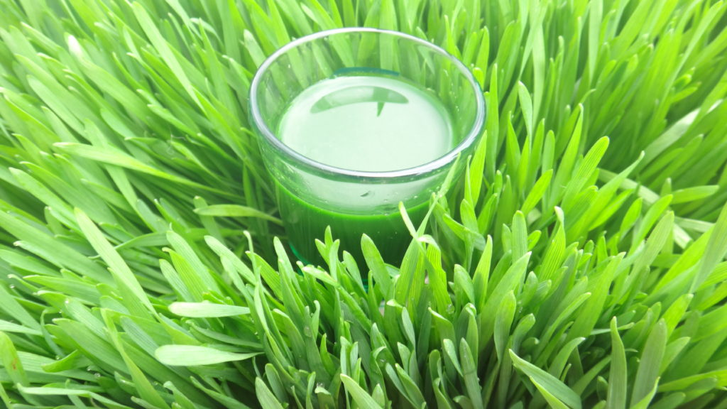 Wheatgrass Juice Shot
