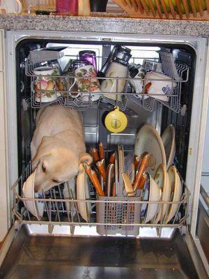 Dog washing dishes