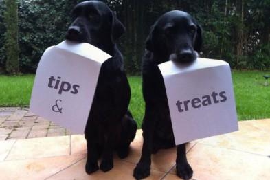 Doggy Dessert Chef tips & treats