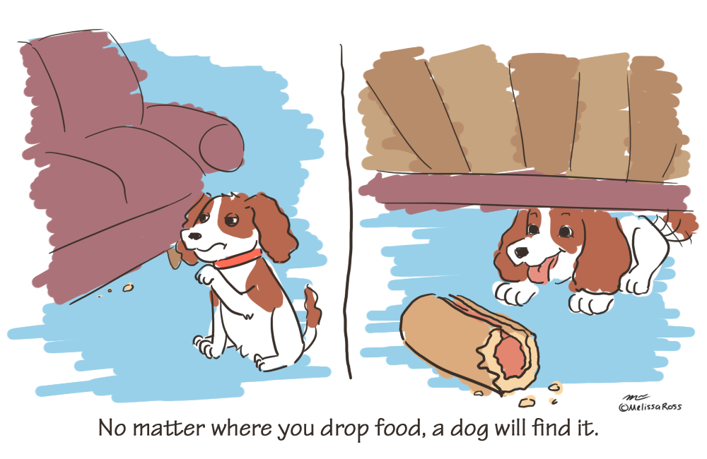 Things I've Learned Baking for My Dog: No matter where you drop food a dog will find it.
