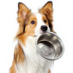 how to find quality dog food [sponsored post]