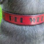 {RUHA} leather dog collar