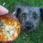 (gluten, grain and wheat-free) mint parmesan sweet potato chews dog treat recipe