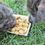 (wheat and gluten-free) cheesy yellow squash dog treat/biscuit recipe