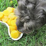 (wheat, gluten, grain and dairy-free) gummy pineapple ham dog treat recipe
