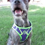 {Doggy Design Sport Harness} Review