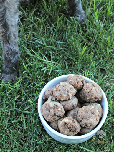 (wheat-free) bacon bison swiss dog treat/biscuit recipe