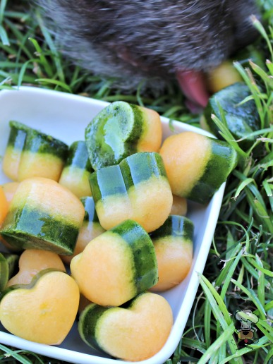(grain, gluten, wheat and dairy-free, vegan, vegetarian) frozen spinach cantaloupe dog treat recipe