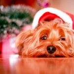 A Round Of App-Paws: Giving Your Pooch Their Best Christmas Yet