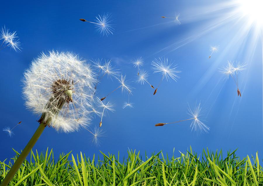 Avoiding Spring Allergies