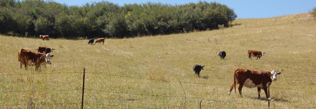 Cattle Ranching in Idaho