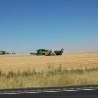 Camas Prairie Wheat Harvest