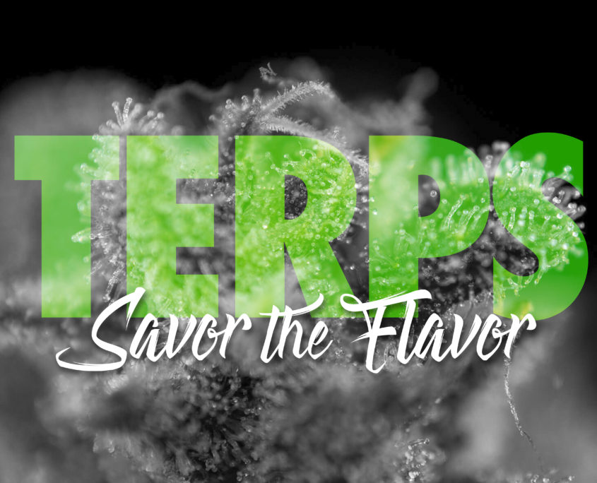 What are Terpenes and What are their benefits?