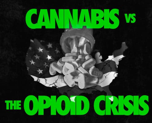 Cannabis vs the Opioid Crisis