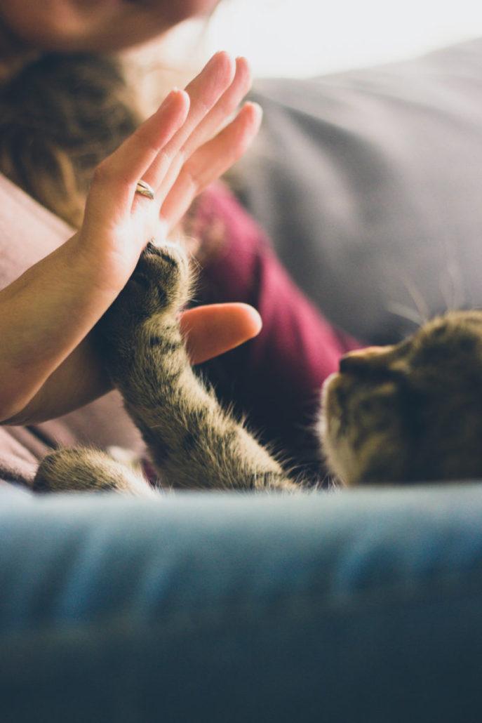 Pets and CBD Remedies