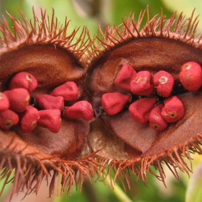 Annatto and Food Allergies