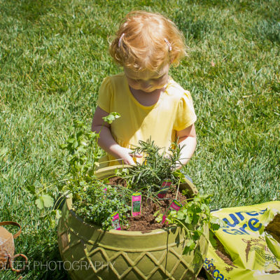 How to Plant an Herb Garden with Kids