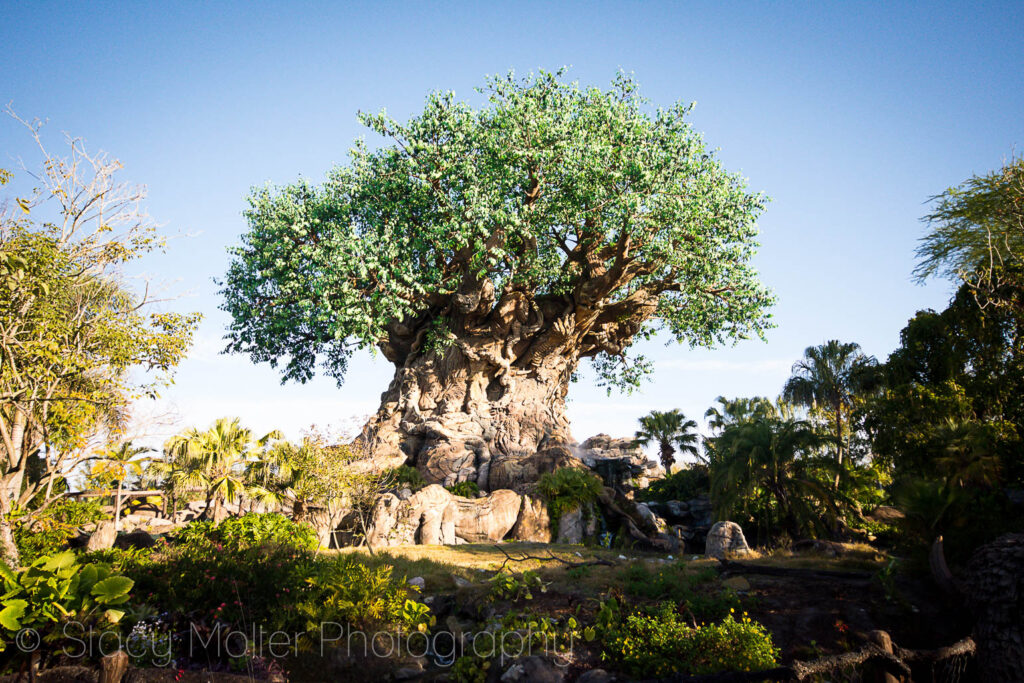 Disney's Animal Kingdom Reflects Walt's Dedication to Conservation