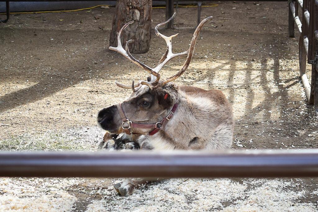 Los Angeles Zoo's 50th ZooLAbration